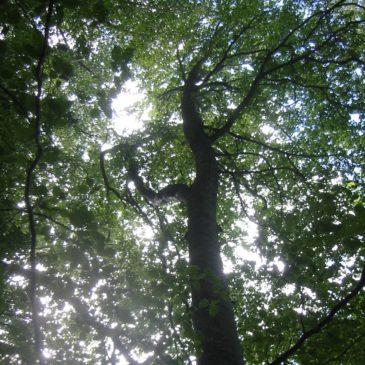 J'ai l'impression d'avoir perdu mon équilibre —  Tu as pensé à mettre de la gratitude et du pardon dans ton arbre généalogique?