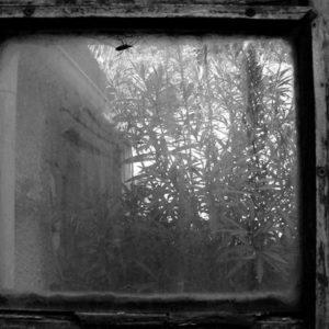 «– Le monde est vraiment moche! – Quel est l'état de ta fenêtre? – Quelle fenêtre ??»